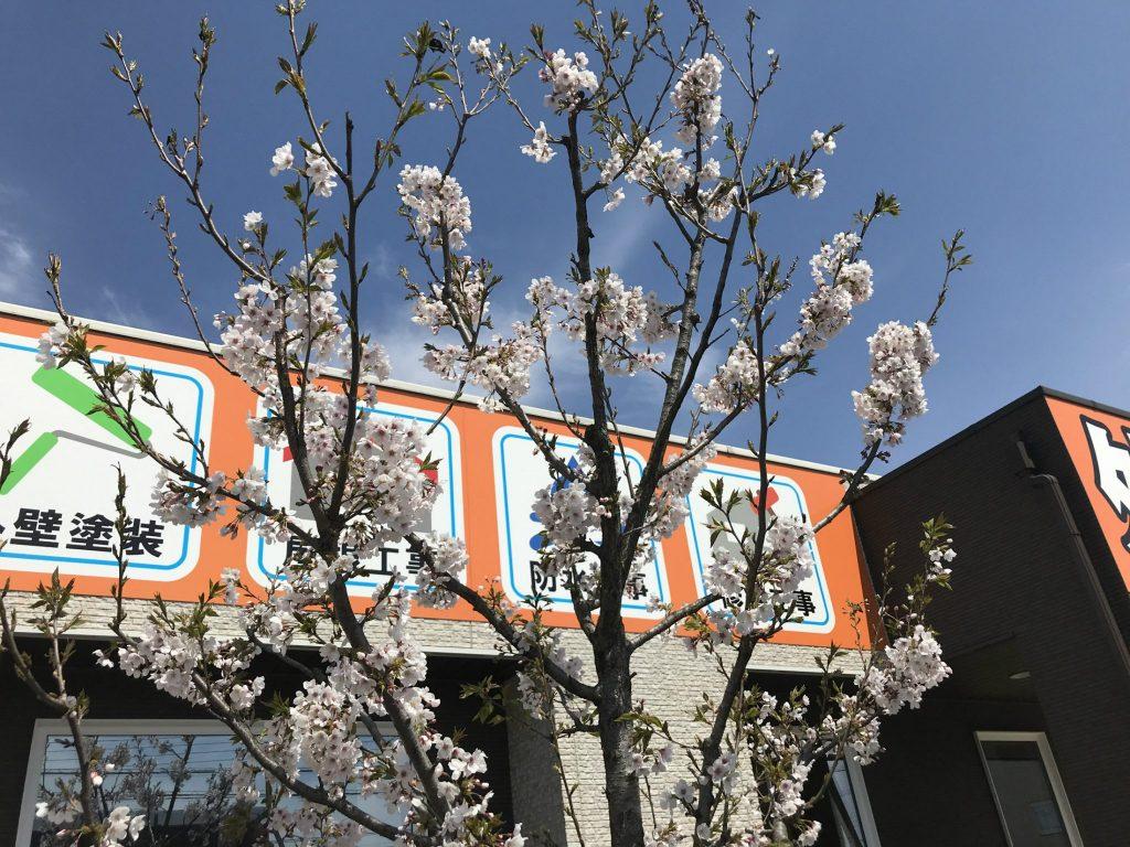 新型コロナウィルス対策について|栃木市の外壁塗装・屋根工事専門店 木の花塗装
